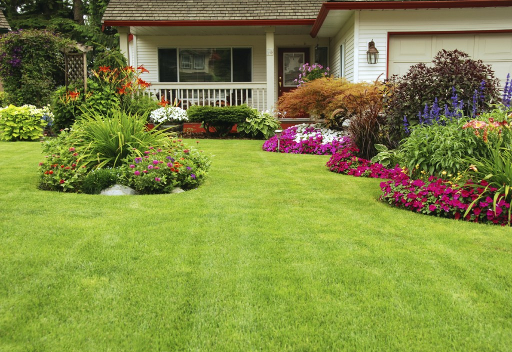 front yard lawn care
